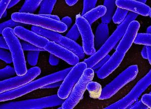 Бактерии будут использоваться для борьбы с раком