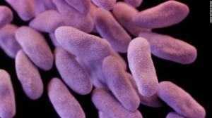 Границ США достигла супербактерия, появления которой так опасались врачи