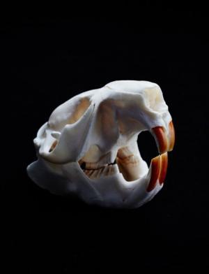 Укрепляем зубы: бобры покажут, как правильно