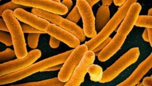 В США зарегистрирован второй пациент, зараженный супербактерией