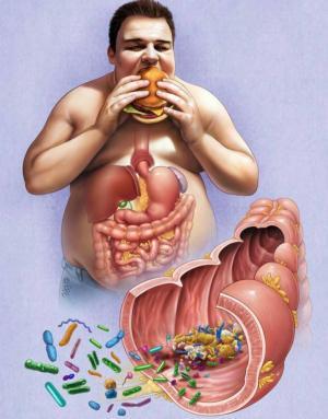 Как накопленный микрофлорой опыт делает новую диету менее эффективной