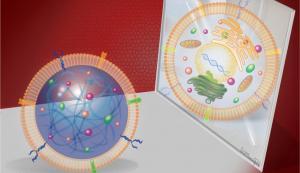Разработка синтетических стволовых клеток и их преимущества