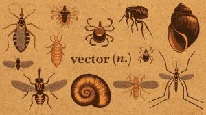 От переносчика до зоонозов: словарь инфекционных заболеваний